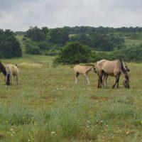 Naturerbeentwicklungsplanung für Naturerbeflächen des Bundes