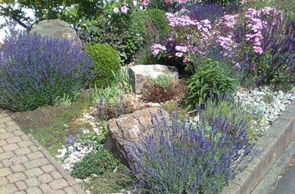 Umgestaltung Vorgarten 1