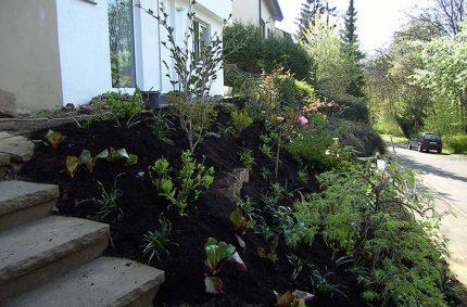 Umgestaltung Vorgarten 4