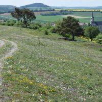 Managementpläne für FFH-Gebiete im Landkreis Main-Spessart